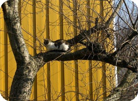 kattitre.jpg