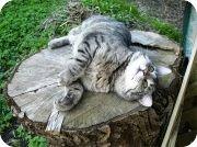 katt1.jpg