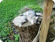 katt3.jpg