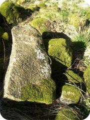 stenliten.jpg