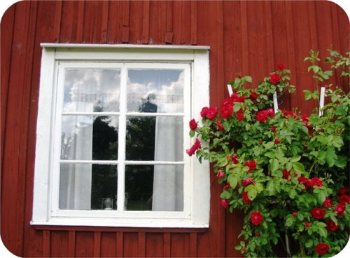 rosestort.jpg