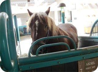 hest2lite1.jpg