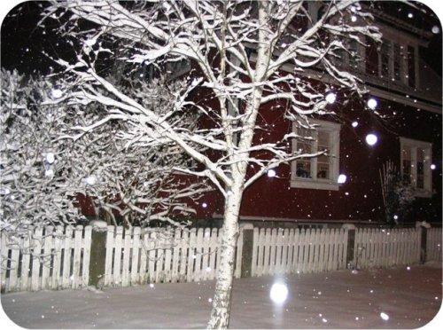 sneesn.jpg